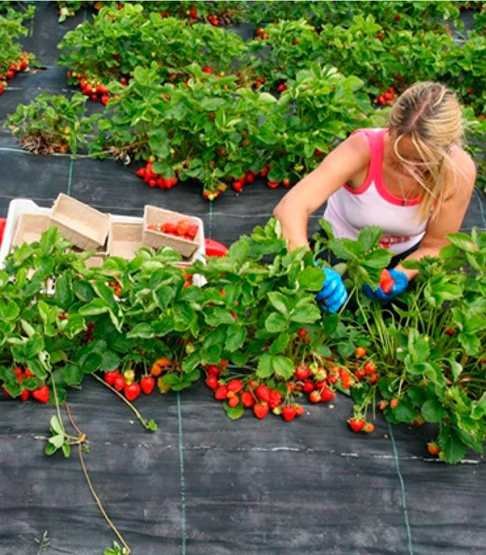 АГРОЮТЕКС Тканый агротекстиль для сада и огoрода