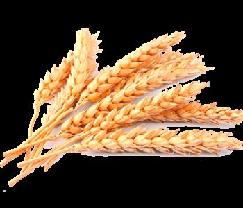 Хранение зерновых культур